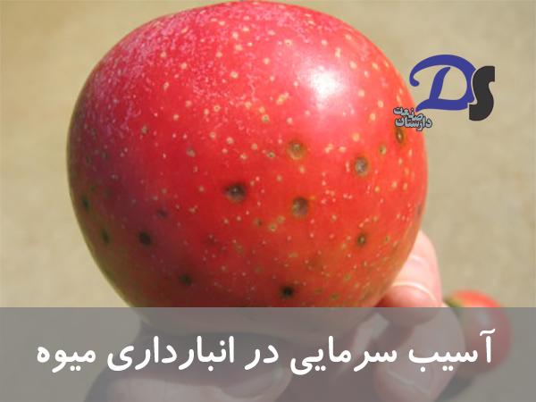 آسیب سرما به میوه سیب در سردخانه