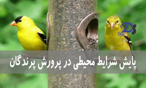 پایش شرایط محیطی در پرورش پرندگان
